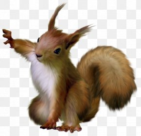 Painted Squirrel Clipart - Squirrel Clip Art PNG