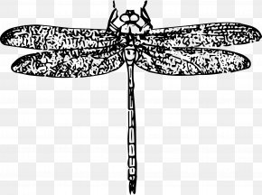 Insect - Insect Dragonfly Clip Art PNG