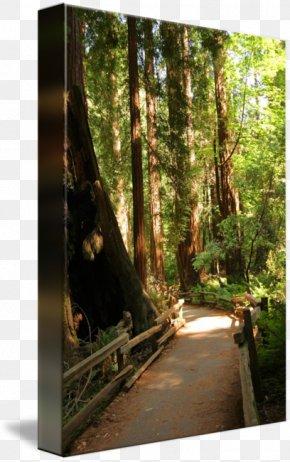 Muir Woods Sign - Nature Reserve Gallery Wrap Rainforest Bayou Sunlight PNG