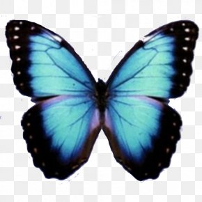 Blue Butterfly - Butterfly PNG