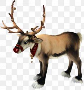 Santa Claus - Rudolph Santa Claus Reindeer Christmas PNG