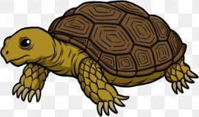 Tortoise Transparent - Turtle Tortoise Clip Art PNG