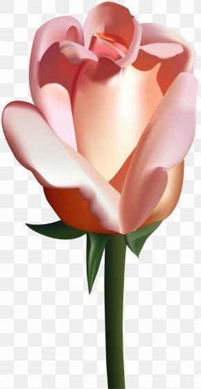Peach Rose Clip Art Image - Garden Roses Clip Art PNG