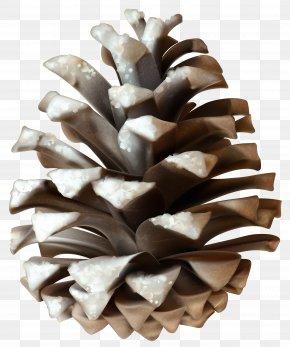 Winter Pinecone Clip Art Image - Conifer Cone Pine Clip Art PNG