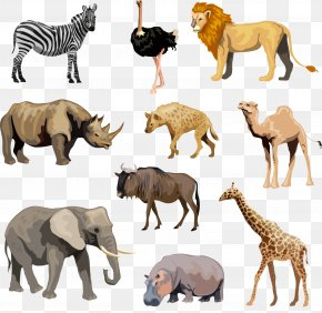 Ostrich - Lion Rhinoceros Hippopotamus Fauna Of Africa PNG