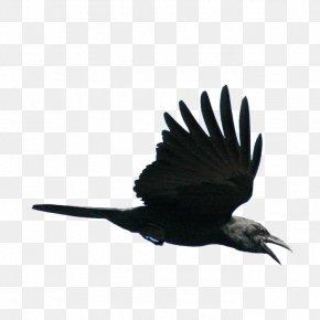 Flying Bird - Bird Viking PNG