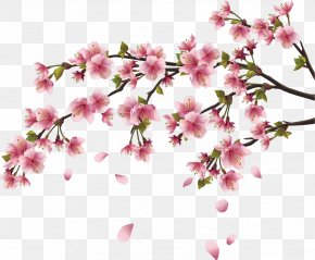 Chinese Flower - Cherry Blossom Wall Decal Branch PNG