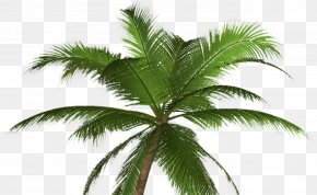 Tree - Arecaceae Tree California Palm Mexican Fan Palm Clip Art PNG