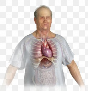 Apex Of The Heart - Introduction To 12-Lead ECG: The Art Of Interpretation Education National Institutes Of Health Stroke Scale Courseware Test PNG