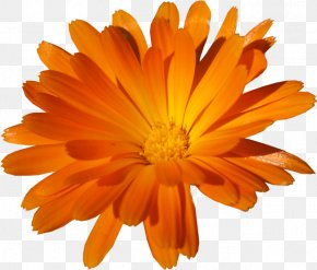 Orange Romantic Flowers - Clip Art Image Adobe Photoshop Psd PNG