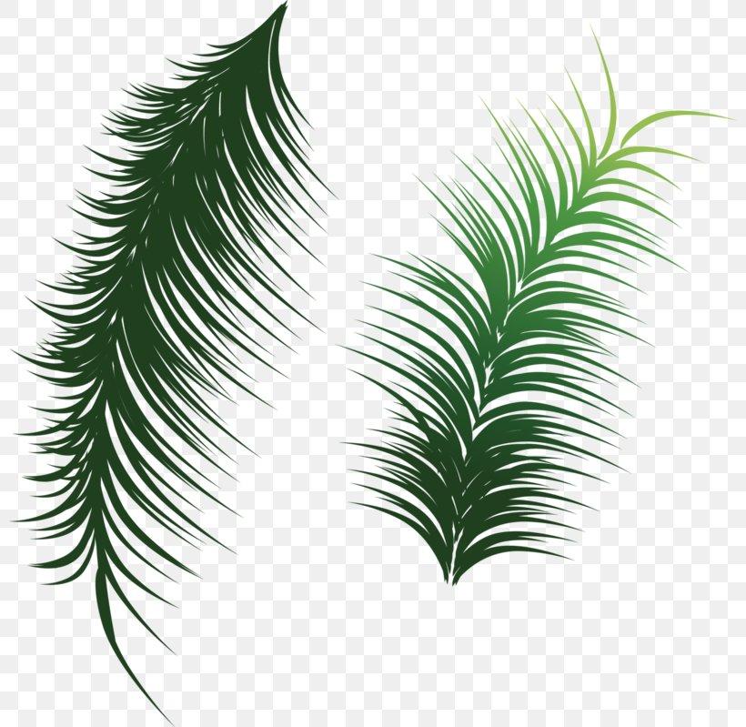 Arecaceae Leaf Coconut Clip Art, PNG, 800x799px, Arecaceae, Branch, Coconut, Green, Leaf Download Free
