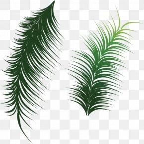 Green Coconut Leaves - Arecaceae Leaf Coconut Clip Art PNG