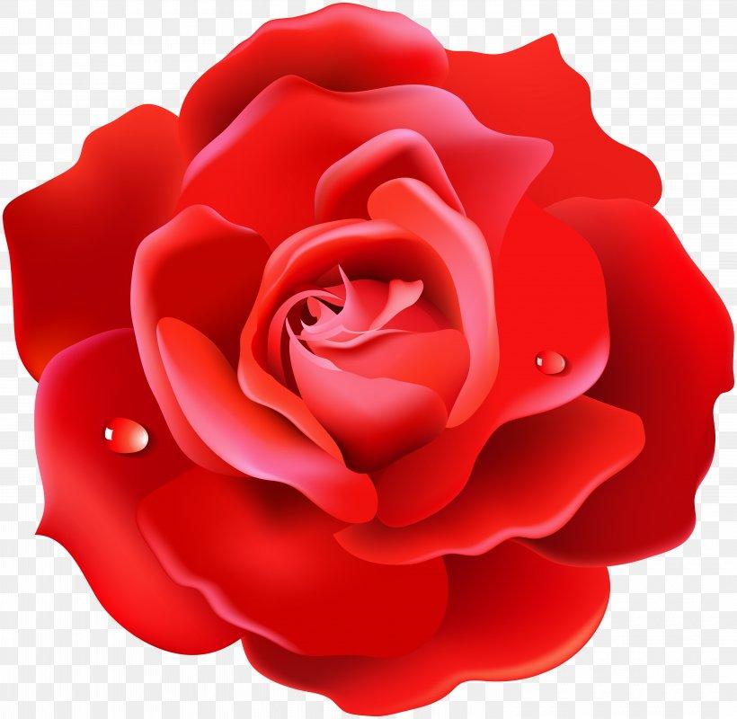 Rose Desktop Wallpaper 4k Resolution High Definition
