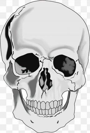 Skull - Skull Human Skeleton Human Head Clip Art PNG