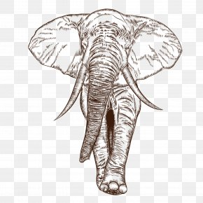 Vector African Elephant - African Elephant Indian Elephant Drawing PNG