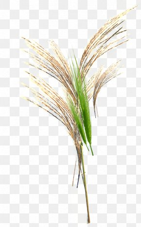 Green Grass - Grasses Google Images Download Broom-corn PNG