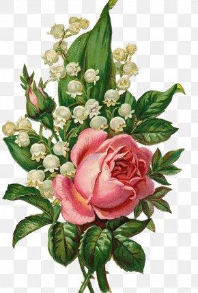Hand-painted Flowers - Garden Roses Centifolia Roses Floral Design Flower Bouquet Cut Flowers PNG