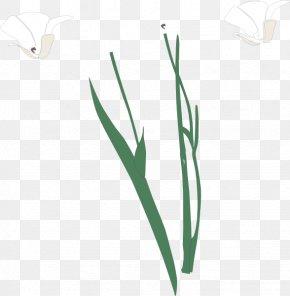 Leaf - Grasses Plant Stem Leaf Flower Family PNG