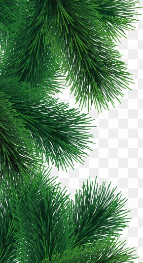Fir-tree Branch Image - Pine Christmas Tree PNG