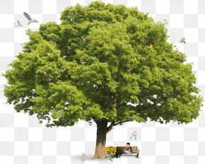Lush Tree Top - Collins Gem Trees Encyclopedia Of Trees Collins Tree Guide Collins British Tree Guide PNG