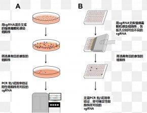 Methods - CRISPR Cas9 Gene Knockout Cell Short Hairpin RNA PNG