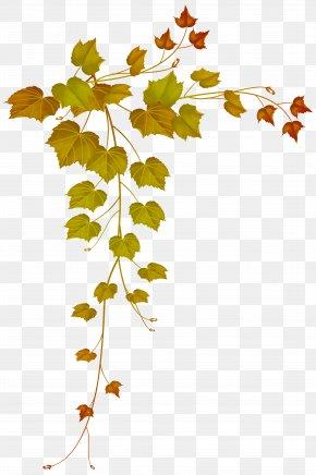 Fall Decorative Leaves Image - Autumn Leaf Color Autumn Leaf Color Maple Leaf PNG