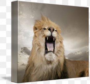 Lion - Lion Roar Leopard Nature Big Cat PNG