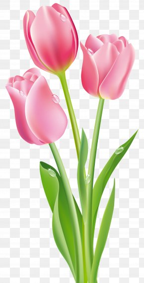 Pink Tulips Clipart Image - Tulip Flower Pink Clip Art PNG
