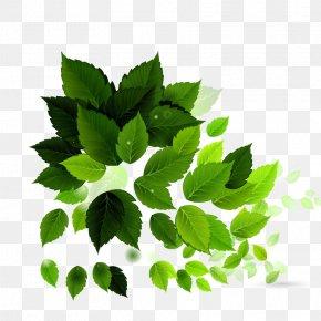 Green Leaf Background Image - Electroporation Royalty-free Green Illustration PNG