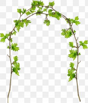 Plant Flowers Frame - Grape Twig Plant Stem Flowerpot Leaf PNG