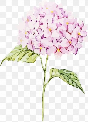 Orchids Of The Philippines Hydrangeaceae - Watercolor Pink Flowers PNG