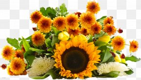 Chrysanthemum - Common Sunflower Flower Bouquet Desktop Wallpaper PNG