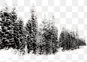 Winter Landscape Snow Tree - Snow Tree PNG