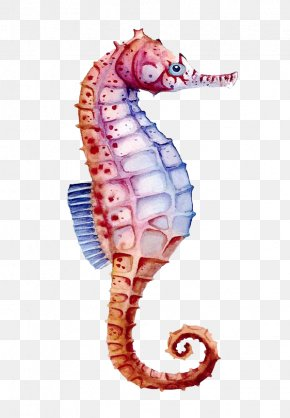 Color Hippo - Seahorse Watercolor Painting Drawing PNG