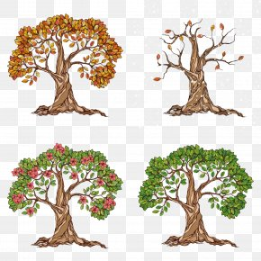 A Tree Of Spring, Summer, Autumn And Winter - Tree Season Autumn Illustration PNG