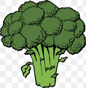 Green Cauliflower - Broccoli Vegetable Clip Art PNG