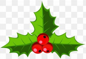 Cartoon Christmas Holly - Clip Art Common Holly Image Christmas Day PNG