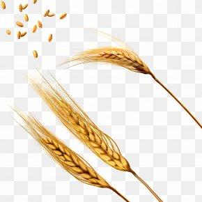 Wheat - Wheat Barley Caryopsis Threshing PNG