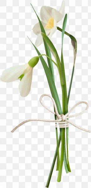 Snowdrop - Flower Spring Clip Art PNG