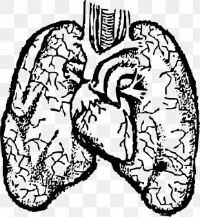 Small Lungs Cliparts - Heartu2013lung Transplant Heartu2013lung Transplant Human Body Clip Art PNG