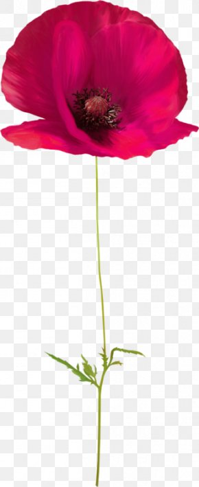 Creative Floral Design Creative Floral Watercolor - Poppy Flower Floral Design PNG