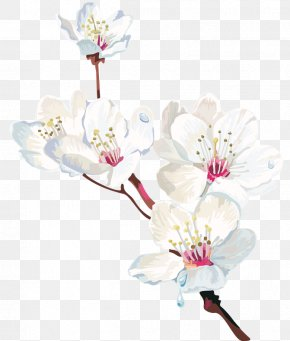 Cherry Blossom - Watercolor Painting Cherry Blossom Flower PNG