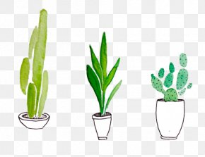 Painting - Watercolor Painting Drawing Cactaceae Succulent Plant PNG