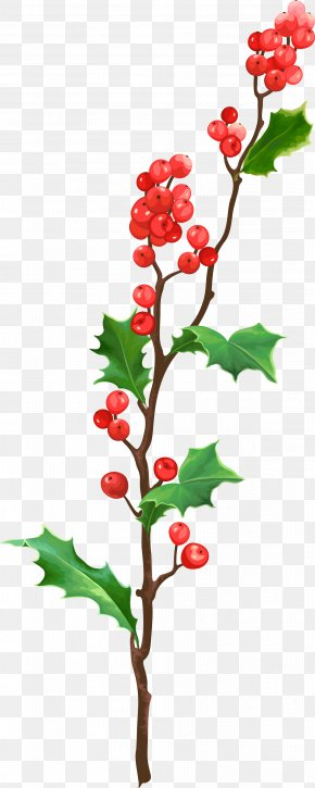 Christmas Plant Material PNG