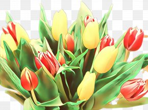 Lily Family Tulipa Humilis - Lily Flower Cartoon PNG