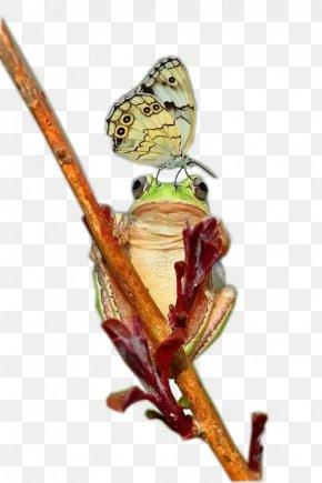 Green Tree Frog - Tree Frog Rhacophorus PNG