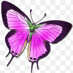 Buterfly - Butterfly Insect Animal Moth Clip Art PNG