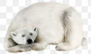 White Bear Transparent Clip Art Image - Polar Bear Kodiak Bear Earless Seal Walrus Polar Regions Of Earth PNG