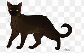 Cat Vs Shark - Bombay Cat Black Cat Korat Into The Wild Dustpelt PNG