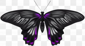 Black Purple Butterfly Clip Art Image - Image File Formats Lossless Compression PNG